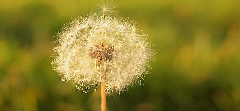 primavera-allergie